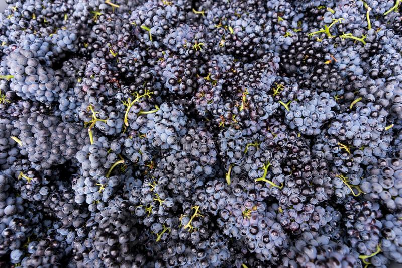堆成熟深红葡萄 库存照片
