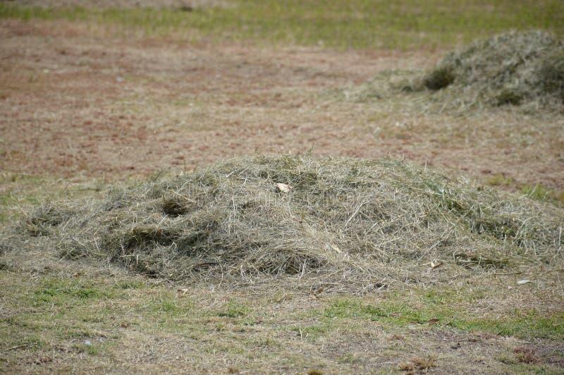 堆新近地被剪的草 免版税库存照片