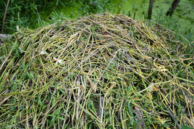堆新近地被剪的草 免版税库存图片