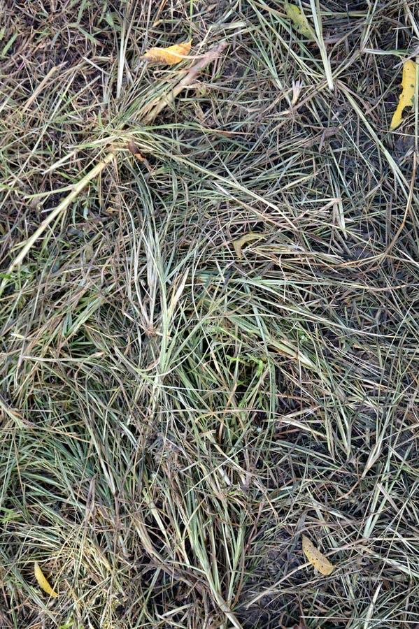 堆新近地被剪的草 库存图片