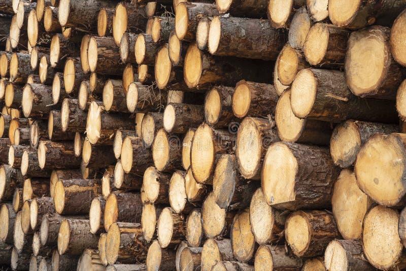 堆最近被切开的木材木头 免版税库存照片