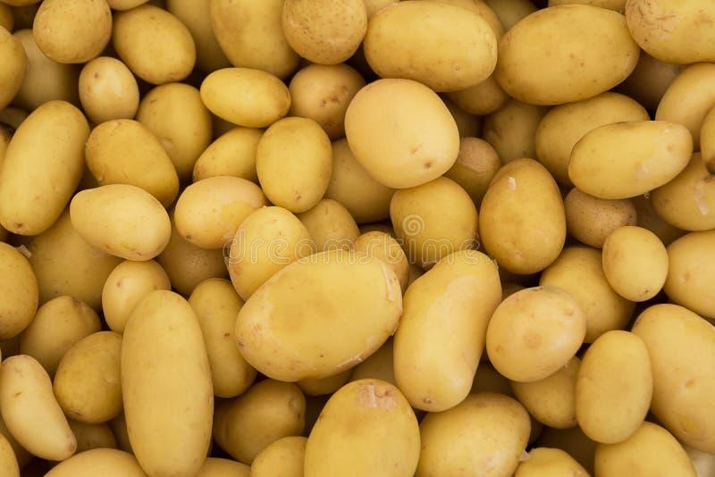 堆未煮过的婴孩削皮的土豆 库存图片