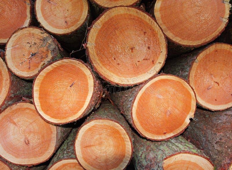堆杉木被锯的结构树 库存照片