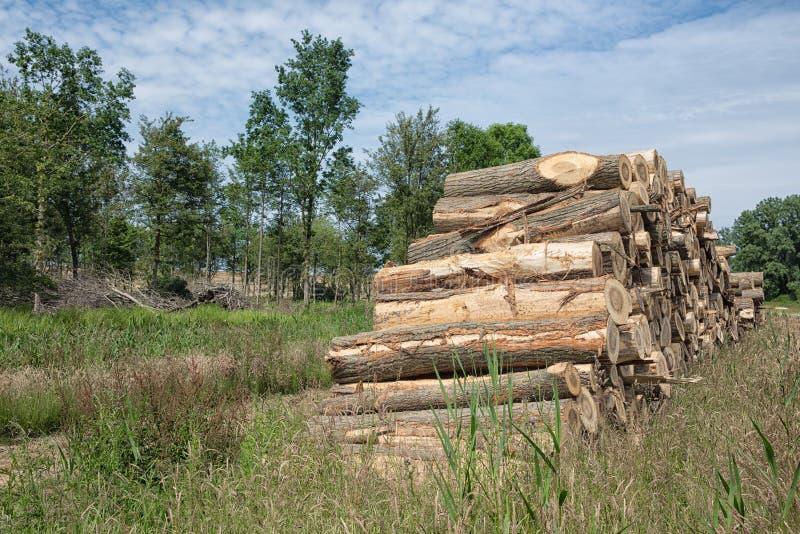 堆树干在森林里 图库摄影