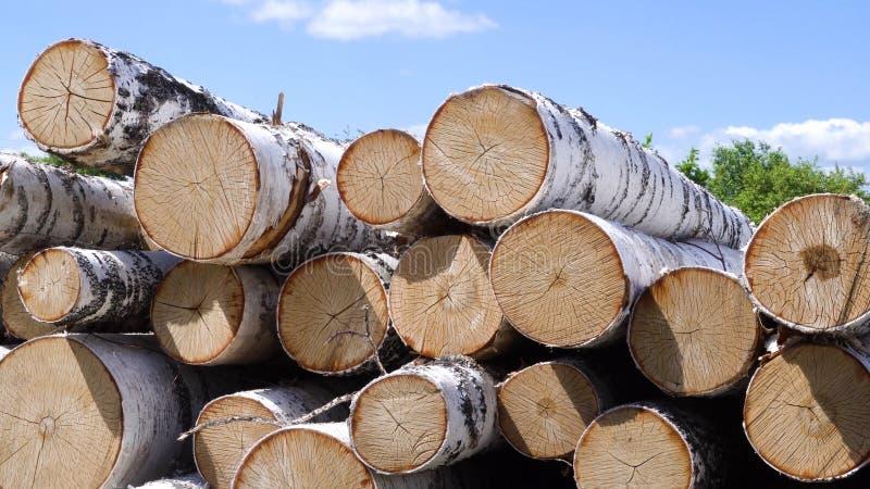 堆桦树木柴 E 桦树的击倒的birchesCut在森林工作的堆在森林砍伐 免版税库存照片