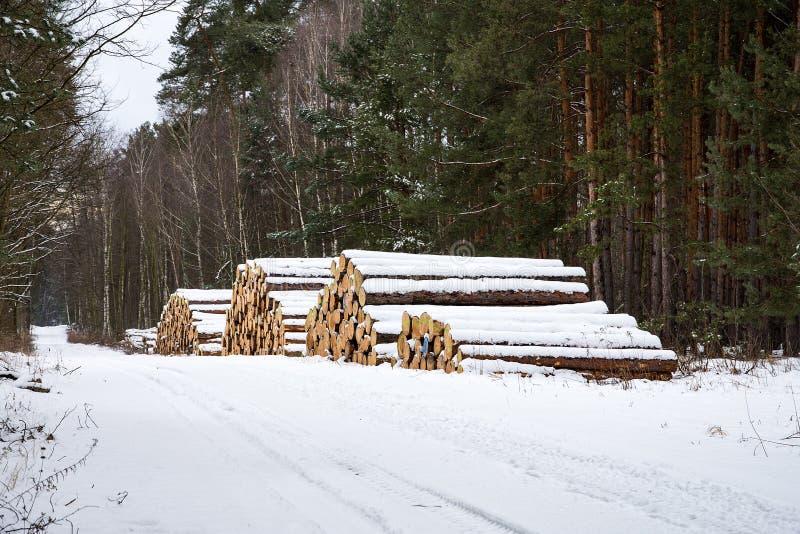 堆注册一个多雪的冬天森林 免版税库存图片