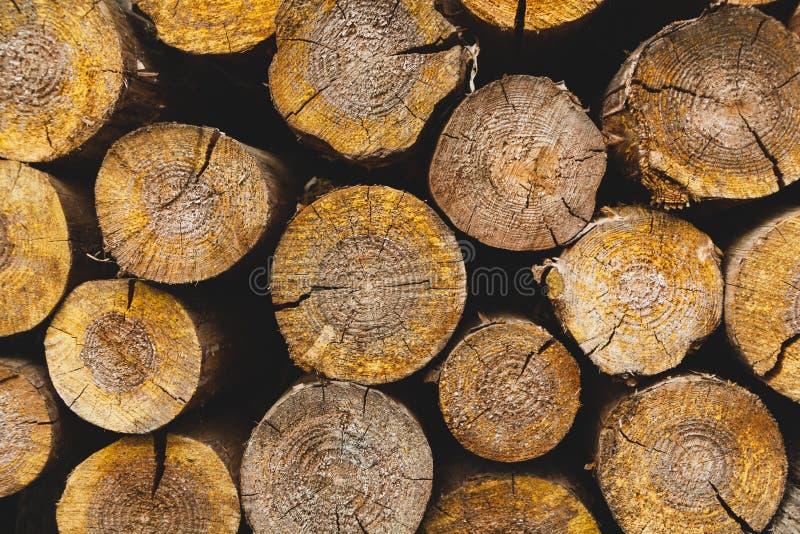 堆的末端被切开的杉木日志 免版税库存照片