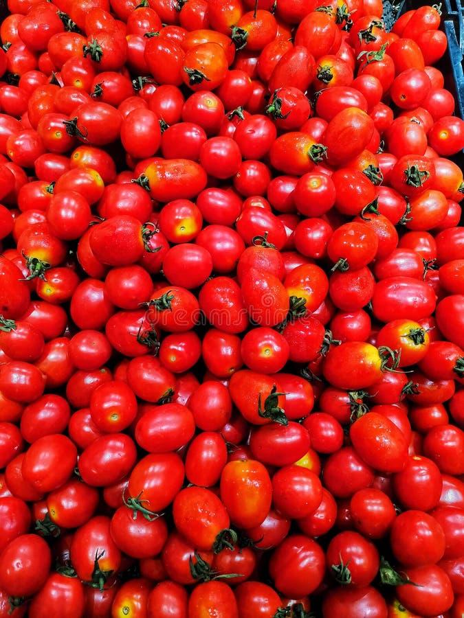 堆的特写镜头红色西红柿 库存图片