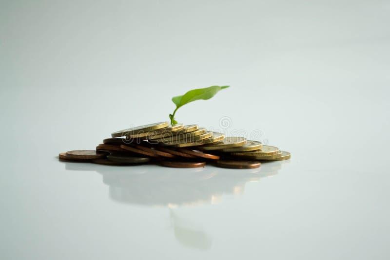 堆硬币在树生活 免版税库存图片