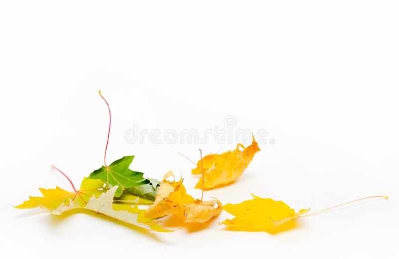 堆积秋天在白色背景的枫叶与拷贝空间 库存照片