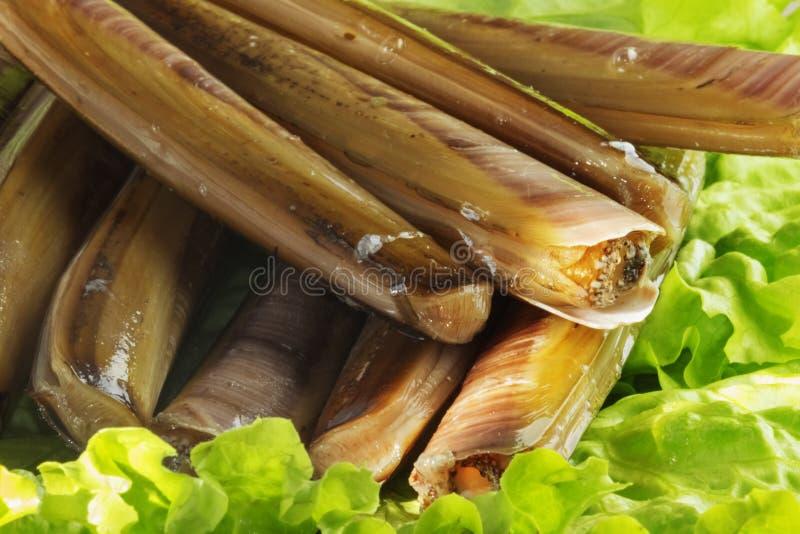 堆竹蛏 免版税库存图片