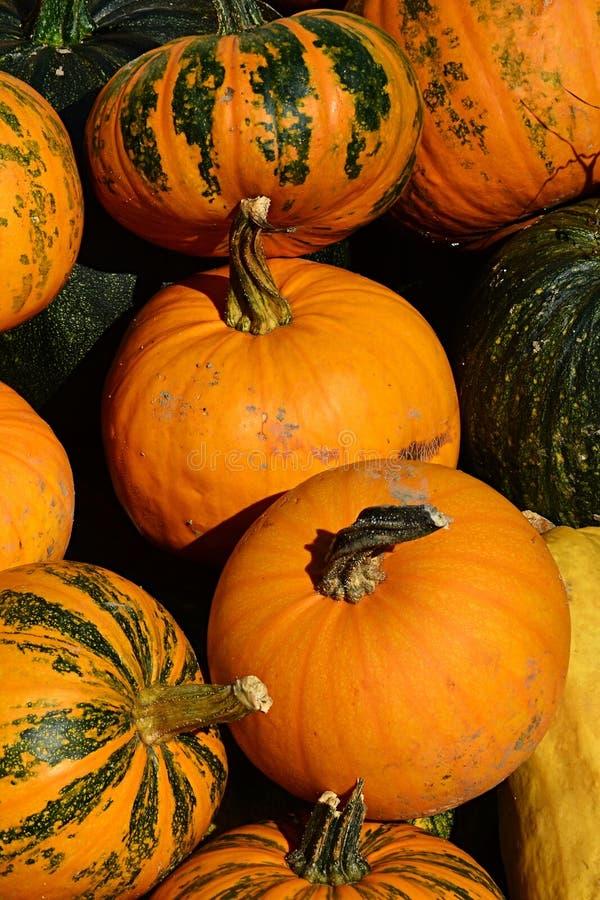 堆纹理各种各样成熟橙色和绿色对橙色镶边南瓜南瓜属Pepo 图库摄影