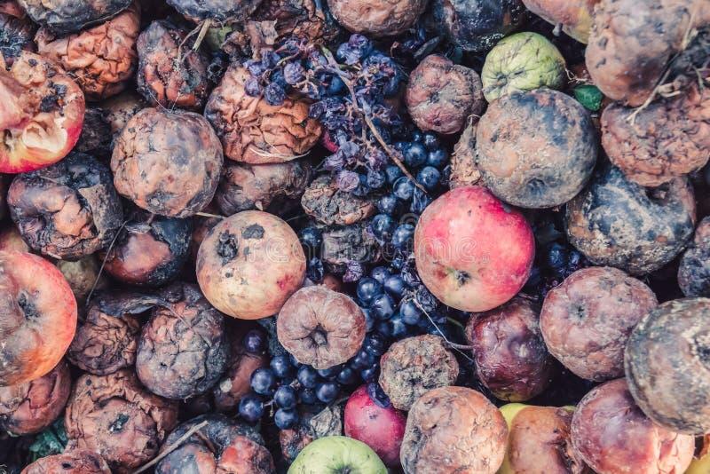 堆腐烂的苹果和葡萄,一被损坏的harve的概念 免版税库存照片