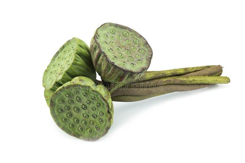 Download 堆莲花种子为在白色吃隔绝 库存照片. 图片 包括有 食物, 蔬菜, 查出, 背包, 新鲜, 有机, 植物群 - 59109666