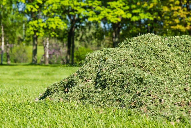 堆被剪的草在公园 免版税库存图片