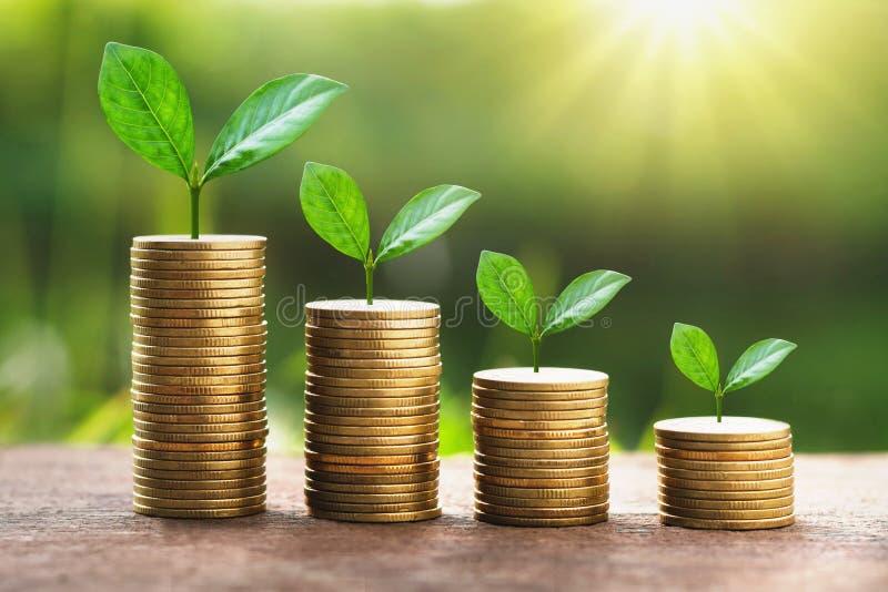堆金钱的生长植物与阳光 企业财务骗局 免版税库存图片