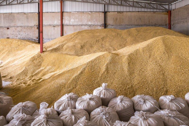 堆麦子五谷和大袋堆在磨房存贮或谷物仓库 免版税库存照片