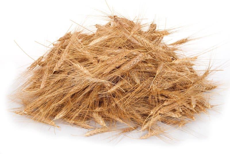 堆麦子的麦子耳朵 免版税库存图片