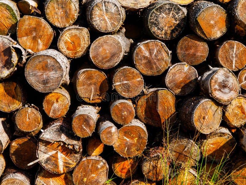 堆od裁减木头 免版税库存图片