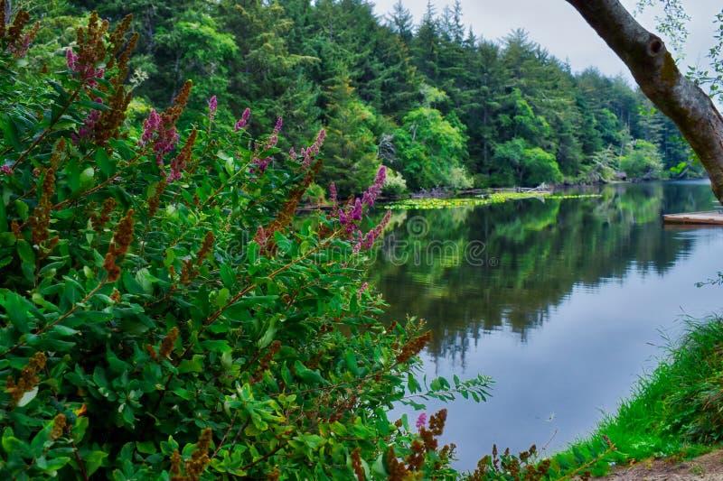 堡垒史蒂文斯国家公园的Coffenbury湖在俄勒冈 免版税库存图片