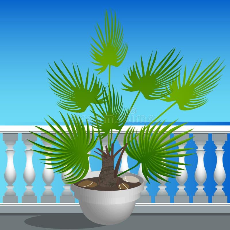 堤防和一棵棕榈树在罐 库存例证
