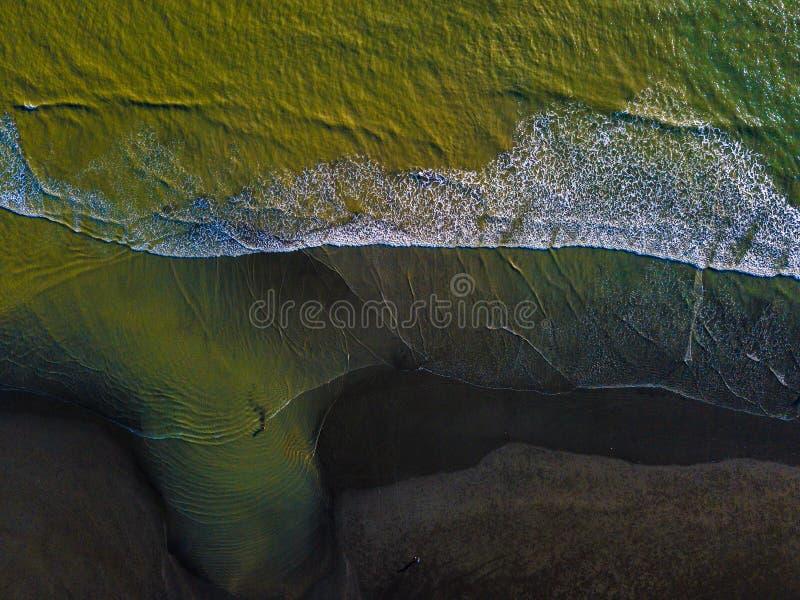 堪察加半岛的埃尔曼桦。2017年堪察加半岛的Erman桦树 免版税图库摄影