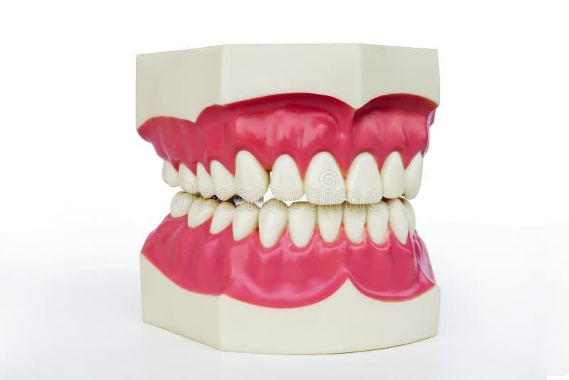 塑料假牙 免版税库存图片
