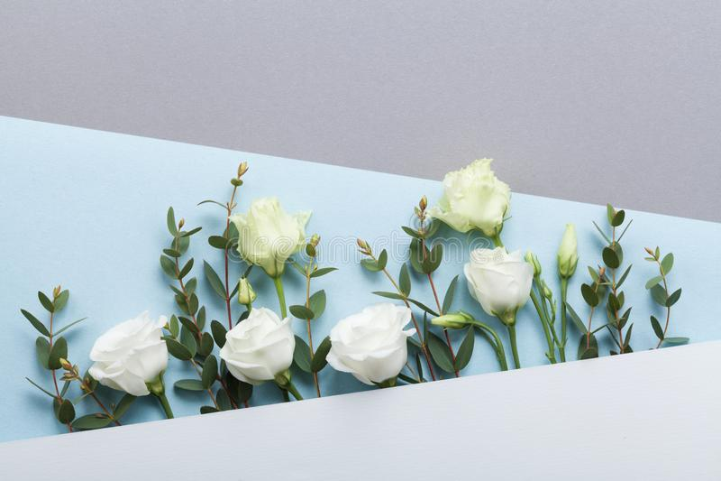 塑造纸牌装饰的美丽的白花和玉树叶子的构成在淡色背景顶视图 平的位置 免版税库存图片