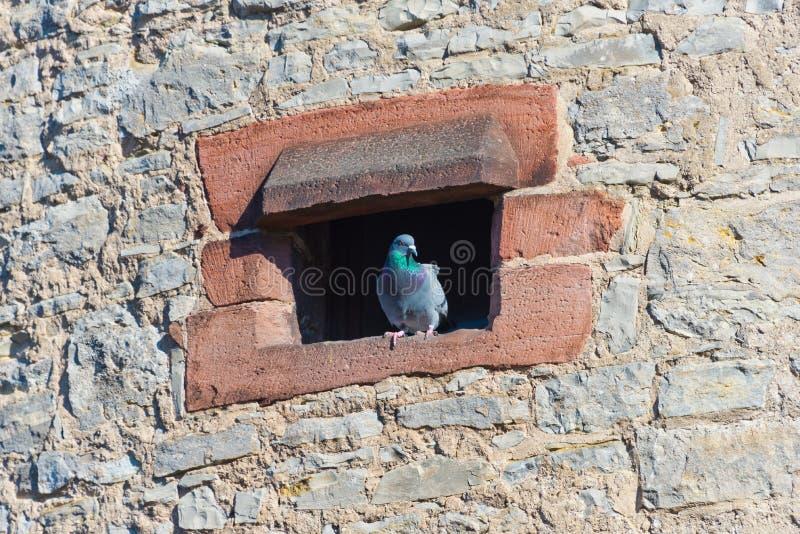 塔和鸽子 图库摄影
