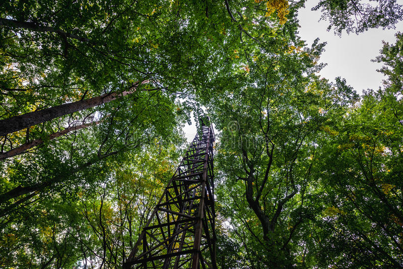 塔在森林里 免版税库存图片