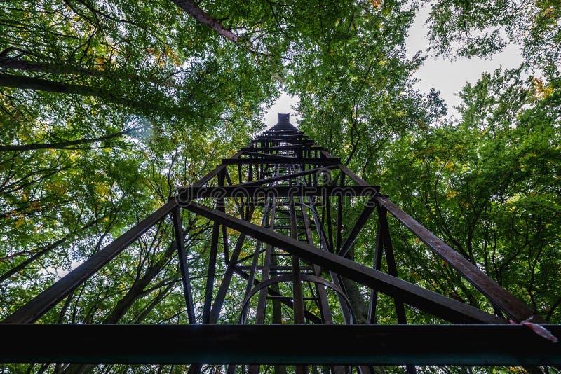 塔在森林里 库存图片