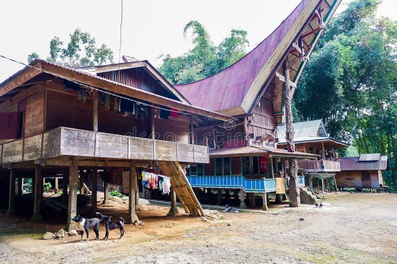 塔娜的Toraja,苏拉威西岛传统村庄 库存图片