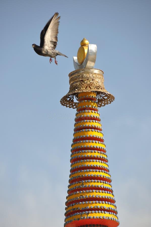 塔屋顶与一只鸽子的在tar喇嘛寺院 免版税库存图片