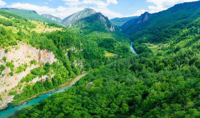 塔拉河和峡谷 免版税库存照片