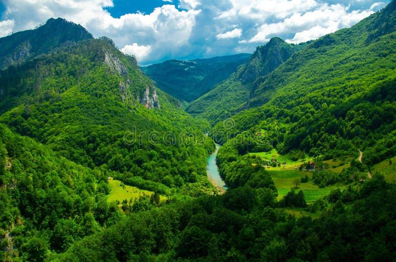 塔拉河峡谷峡谷,Montenegr山脉和森林  库存照片