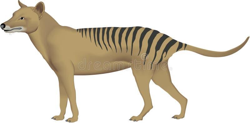 塔斯马尼亚的老虎 向量例证