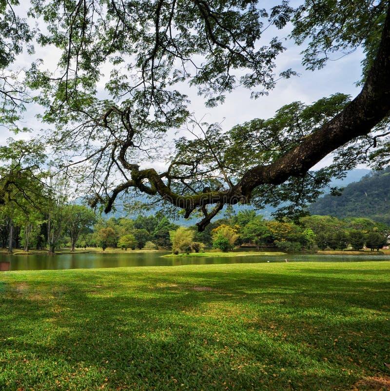 塔曼tasik太平或太平湖在霹雳州,马来西亚 库存照片