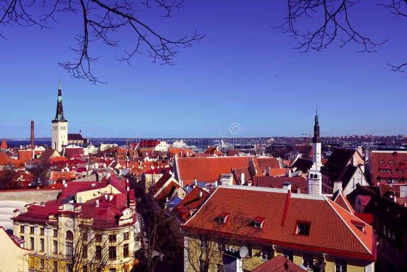 塔林,爱沙尼亚的首都 中世纪城市和它的红色屋顶,塔林,爱沙尼亚的全景 库存照片
