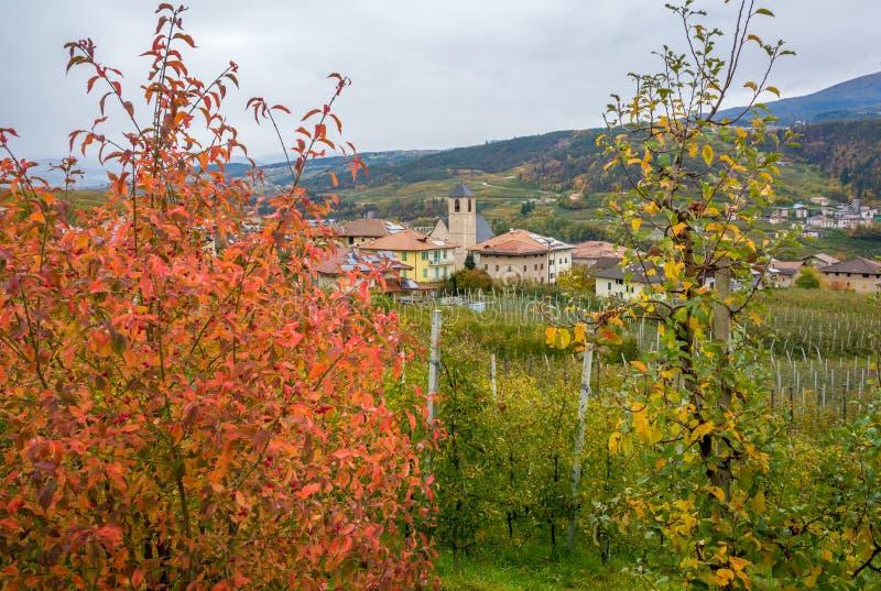 塔苏洛,位于Val的村庄秋天视图di Non,特伦托自治省女低音阿迪杰,意大利 村庄为它美好的orch是著名的 免版税库存图片