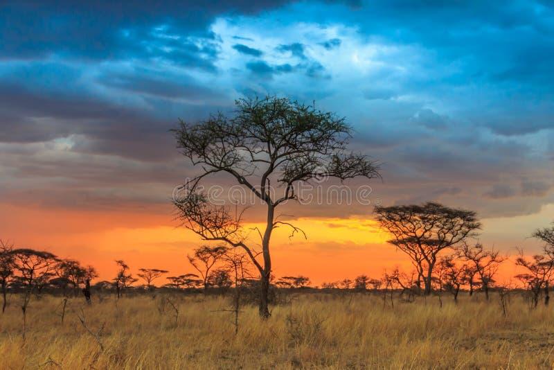 塞伦盖蒂国立公园在坦桑尼亚西北部 免版税库存图片