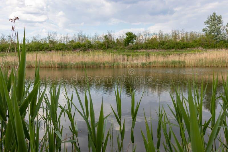 塞尔维亚诺维萨德附近的多瑙河蒂萨多瑙河航道 免版税库存图片