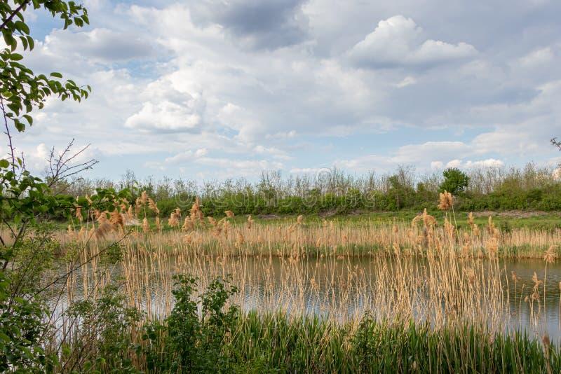 塞尔维亚诺维萨德附近的多瑙河 — 蒂萨 — 多瑙河通道 库存图片