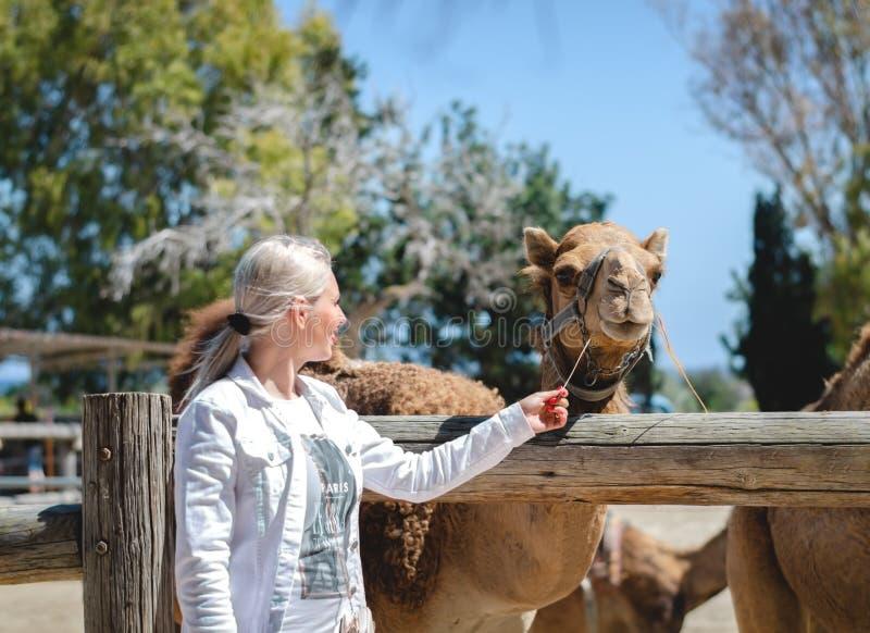 塞浦路斯拉纳卡 设法一愉快的年轻女人喂养与秸杆的一头独峰驼在动物园公园 旅游景点在假期时 免版税库存图片