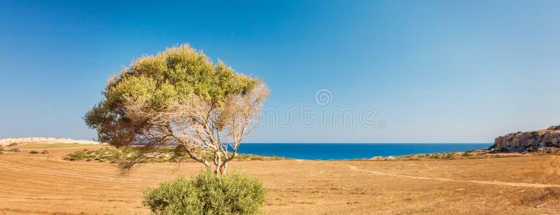 塞浦路斯Ayia Napa,海角格雷科半岛,全国森林公园 库存照片