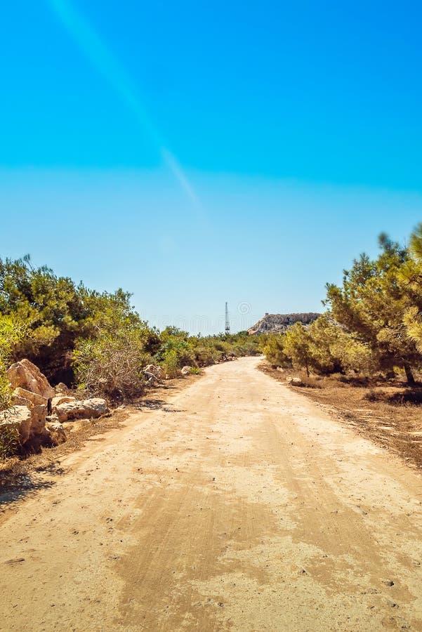 塞浦路斯Ayia Napa,海角格雷科半岛,杉树树丛,在kavo格雷科的路在全国森林公园 库存照片
