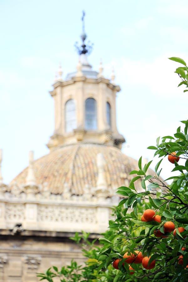 塞维利亚大教堂和橙树、塞维利亚的标志和西班牙 库存照片
