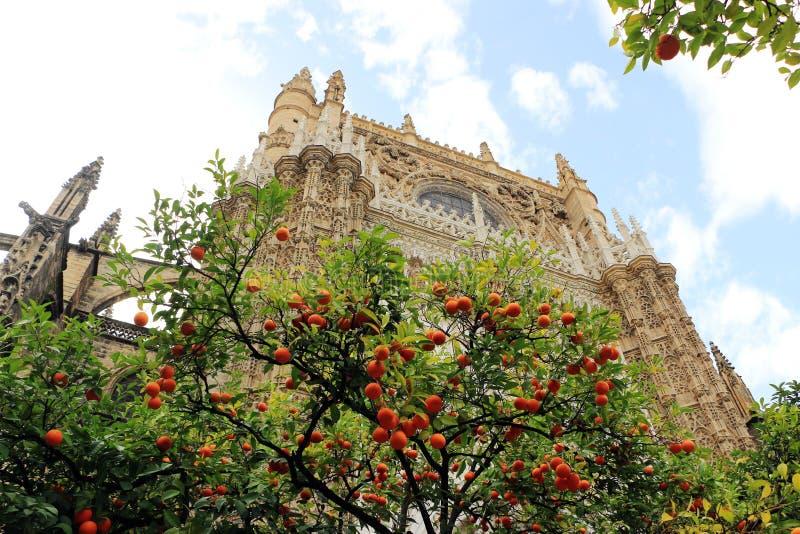 塞维利亚大教堂和橙树、塞维利亚的标志和西班牙 免版税库存图片