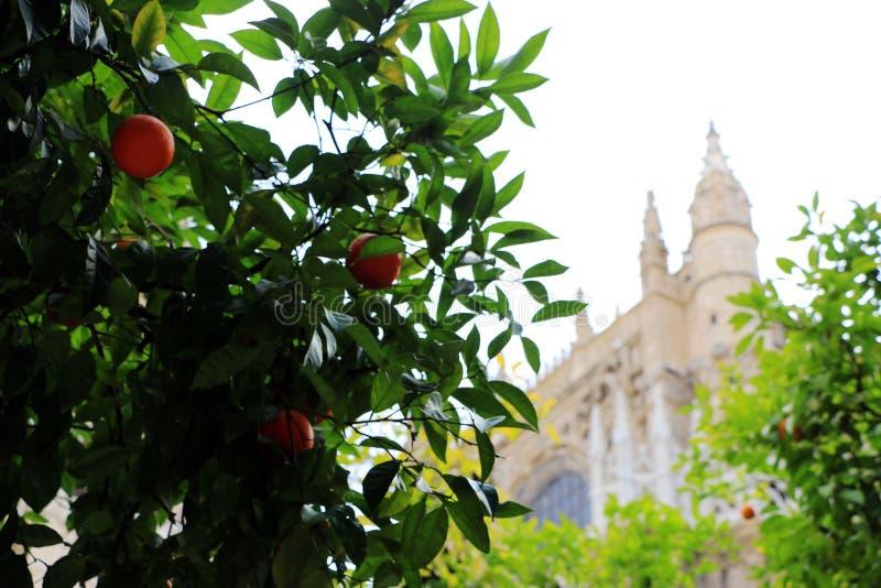 塞维利亚大教堂和橙树、塞维利亚的标志和西班牙 免版税图库摄影