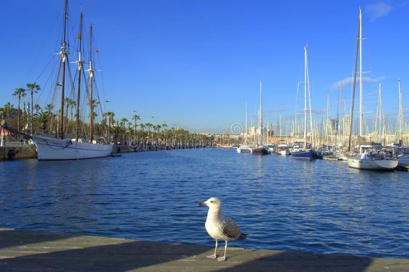 巴塞罗那口岸海鸥 库存图片