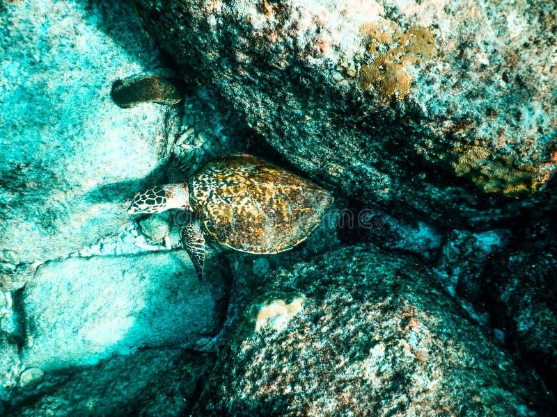 塞舌尔群岛圣皮埃尔海底Lslet海龟 图库摄影
